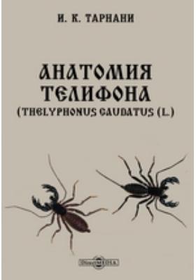 Анатомия телифона. (Thelyphonus caudatus (L.)