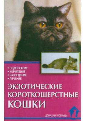 Экзотические короткошерстные кошки : Содержание. Кормление. Разведение. Лечение