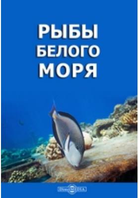 Рыбы Белого моря