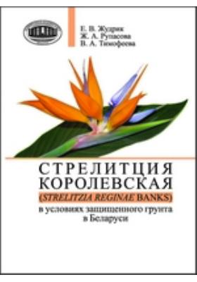 Стрелитция королевская (Strelitzia reginae Banks) в условиях защищенного грунта в Беларуси